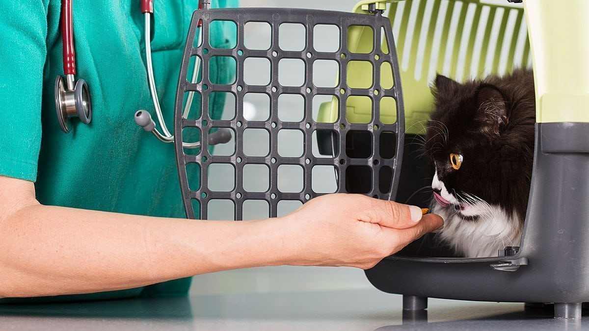 Pursuing a Healthcare Career Working In a Veterinary Clinic