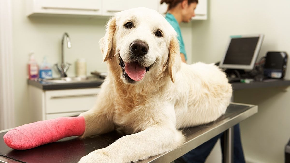 Veterinary administrative assistants get to know the friendly faces of their clinic's patients.