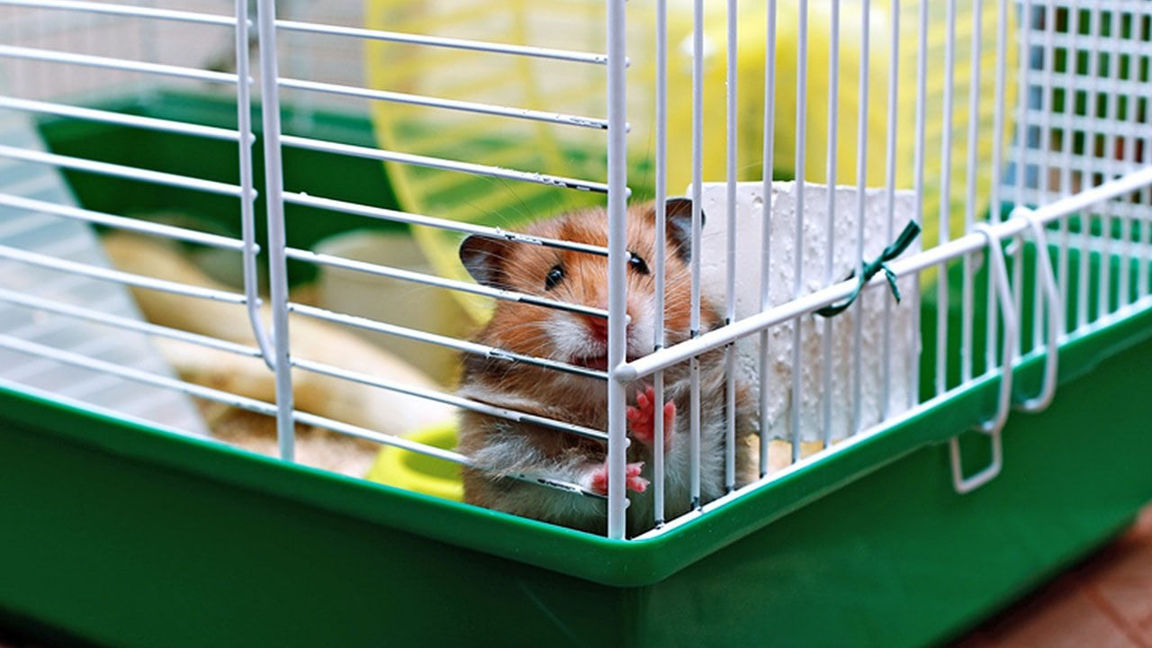 Rodents do best with a diet of plant-based foods and special food pellets